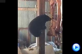 창고에 침입한 아기곰